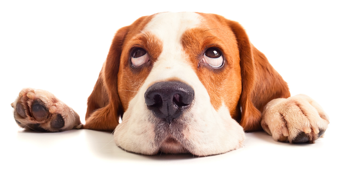 5 Common Myths About Pets and Body Corporates – Courtesy of Statewide Conveyancing
